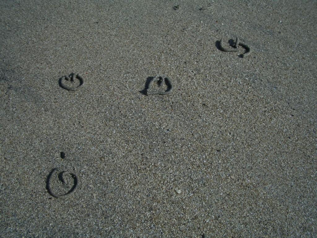 Песочные червяки
