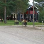 Грибы в Финляндии